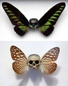 skulls & wings