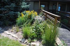 A prairie type planting at the front door.