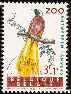 1962: Philanthropic Funds - birds of Antwerp Zoo. Greater Bird of Paradise. sg1820