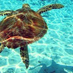 Caretta caretta turtle, National Water park in Zakynthos island, Greece Baja California, Villas In Europe, Fauna Marina, Extinct Animals, Paradise On Earth, Light Of The World, Marmaris, Island Beach, Ocean Life