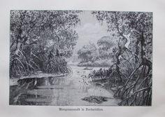 1898 MANGROVENWALD INDIEN alter Druck antique Print Lithographie Mangroven