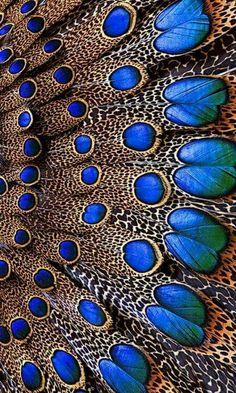 c2c5b77d0df Planet earth is blue Peacock Colors