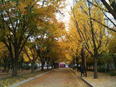 가을. 보라매공원