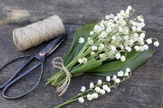 """Der Maiglöckchen-Strauß ist in Frankreich ein sehr beliebter Frühlingsgruß: Ein am 1. Mai verschenktes Sträußchen aus """"muguets"""", wie die Blume auf französisch genannt wird, soll für das ganze restliche Jahr Glück bringen"""