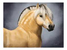 Norwegian Fjord Horse Fine Equine Art Print of by Marezidoats, $12.00