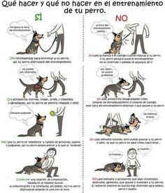 Mientras estás educando a tu perrito, es importantísimo que no uses cosas hostiles como collares de castigo.
