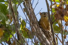 Fabulous photo by Nadim Baki #photography   #animals   #squirrel