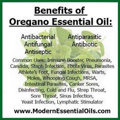 4 Health Benefits Linked To Oregano Oil Oregano Essential Oil, Doterra Essential Oils, Essential Oil Blends, Young Living Oils, Young Living Essential Oils, Oregano Oil Benefits, Stomach Ulcers, Coconut Health Benefits, Natural Cures