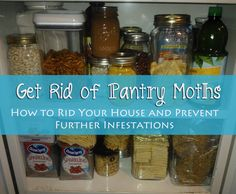 How To Just About Anything: Get Rid of Pantry Moths
