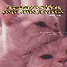 Cute Cat Memes, Cute Love Memes, Funny Love, Love Phrases, Love Words, Romantic Humor, Romantic Manga, Frases Tumblr, Relationship Goals Pictures