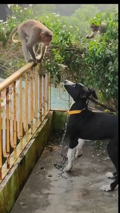 These chimps come by everyday to keep the doggo company. Cute Funny Animals, Cute Baby Animals, Funny Dogs, Animals And Pets, Cute Dogs, Wild Animals, Cute Animal Videos, Funny Animal Pictures, Dog Pictures