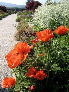Powerscort Gardens, Enniskerry, Wicklow, Ireland Copyright: Laura Borlea