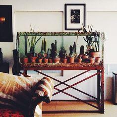 How amazing is this terrarium!?! // @JustinaBlakeney on Instagram