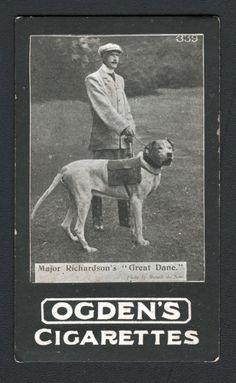 DOG War Great Dane Ammunition Photo Trading Card 1902