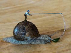 Snail bait...