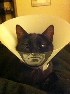 Apparently, your poor cat's cone collar can also be a canvas for your creative expression!