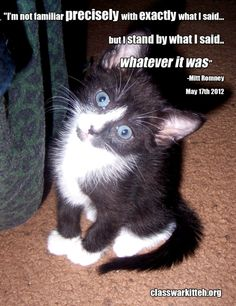 This kitten seems confused by what Romney said #ClassWarKitteh