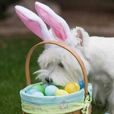 70 The Easter Egg Hunt ideas in 2021   easter egg hunt, egg hunt, easter