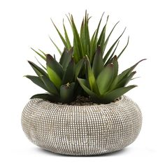 Potted plants are an effortless way to add a natural touch to your indoor décor. Create a succulent style look for your kitchen or office with this perfect potted plant. Perfect Pots, Indoor Decor, Potted Plants