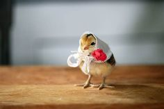 Just because: 11 pictures of chicks in hats - Pets