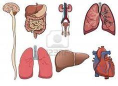 organen - Google zoeken