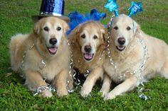Happy New Year  .. Love Tyler, Brie and Bentley