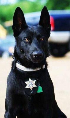 HERO DOG - Police Dog Rescues Deputy From Brutal Roadside Ambush. What a story!!