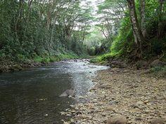 Kauai Back Country River