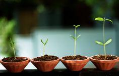 Nyt se on todistettu – kasvit todella osaavat puhua! - MTV.fi ...