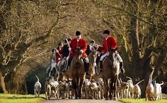 Fox Hunt.....nothing more beautiful!