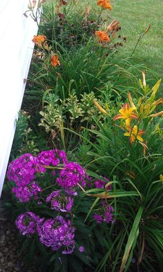Mamaw's flower bed