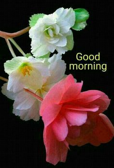 Hope you have a wonderful day! Good Morning Coffee Gif, Good Morning Beautiful Pictures, Beautiful Morning Messages, Good Morning Roses, Good Morning Inspiration, Good Morning Beautiful Images, Good Morning Picture, Morning Pictures, Beautiful Days