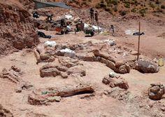 In Argentinien haben Forscher Dutzende Knochen eines Dinosauriers freigelegt. Es soll sich um das größte Exemplar aller Zeiten handeln: Das Tier war nach Angaben von Experten des Paläontologie-Museums Egidio Feruglio in Trelew (MEF) 40 Meter lang und 80 Tonnen schwer.