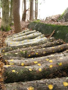 Shiitake Mushroom Logs - Grow Your Own. Easy! Tutorial with Step by Step Photos: Michaela Medina - thegardenerseden.com