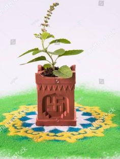 Tulasi Plant, Telugu, Festivals, Planter Pots, Deco, Blouse, Interior, Indoor, Decor