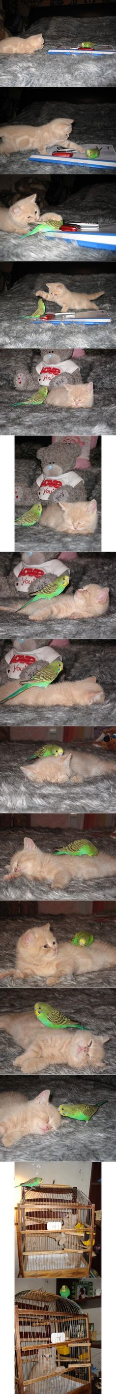 A cat bird love story!  So adorable!