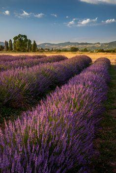 Assisi, Umbria, Italy (by Iggi Falcon)