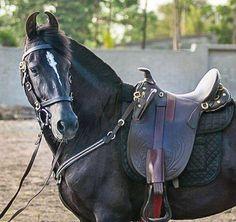 Черные Лошади, Дикие Лошади, Красивые Лошади, Конные Седла, Домашние Питомцы, Лошадиные Породы, Конюшни, Седла, Зебры