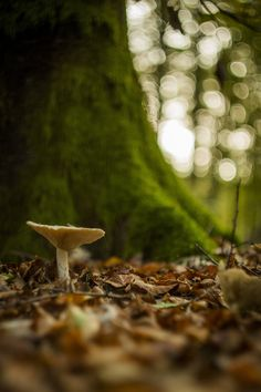 Magical Forest Mushroom Fungi Stuffed Mushrooms Fairy Land Woodland Greenery Beautiful Pictures Enchanted Natural Beauty