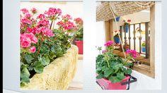 Color en primavera Plants, Spring, Colors, Planters, Plant, Planting