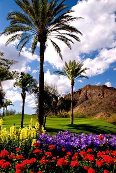 ✮ Palm trees and colorful flowers thrive in the deserts of Phoenix, Arizona