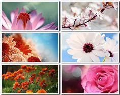 Цветы - фото высокого разрешения (FullHD+) Clip Art, Plants, Painting, Painting Art, Planters, Paintings, Plant, Planting, Planets