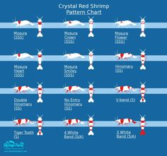 Grading Crystal Red Shrimp / The Shrimp Farm Shrimp Tank, Prawn Shrimp, Diy Aquarium, Planted Aquarium, Freshwater Aquarium Shrimp, Red Cherry Shrimp, Shrimp Farming, Tropical Fish, Goldfish