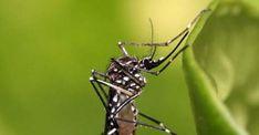 #Desde el Ministerio de Salud piden tomar medidas para prevenir el zika, dengue y chikunguña - El Liberal Digital: El Liberal Digital Desde…