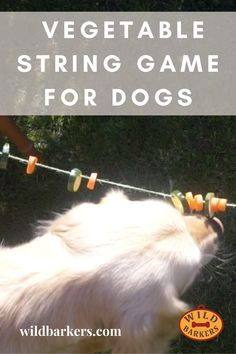 String Vegetable Game For Dogs: A Cheap and Easy Enrichment Activity For Dogs Brain Games For Dogs, Dog Games, Pet Dogs, Dog Cat, Pets, Dog Enrichment, Fun Brain, Bichons, Cavapoo