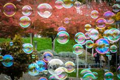 Find images of Bubbles. ✓ Free for commercial use ✓ No attribution required ✓ High quality images. Speech Language Therapy, Speech Therapy Activities, Speech And Language, Language Activities, Free Pictures, Free Images, Spiritual Coach, Blowing Bubbles, Soap Bubbles