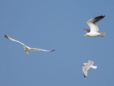 Möven auf Futtersuche Birds, Animals, Holiday Photos, Animales, Animaux, Bird, Animal, Animais