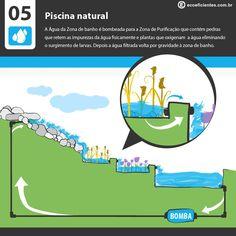 O que é e como fazer uma piscina natural?  Uma piscina natural é aquela que ao invés de usar cloro e outros produtos químicos para a sua limpeza, cria uma área de purificação, onde plantas específicas …