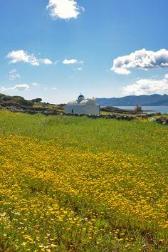 Church in Kimolos (by Nikolas Loukakis) Go Greek, Kirchen, Greek Islands, Crete, My Happy Place, Homeland, Wild Flowers, Spaces, Landscape