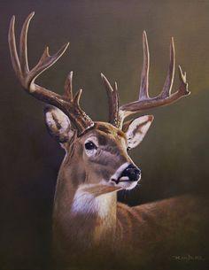 Wildlife Paintings, Wildlife Art, Animal Paintings, Animal Drawings, Drawing Animals, Whitetail Deer Pictures, Deer Photos, Deer Drawing, Watercolor Deer